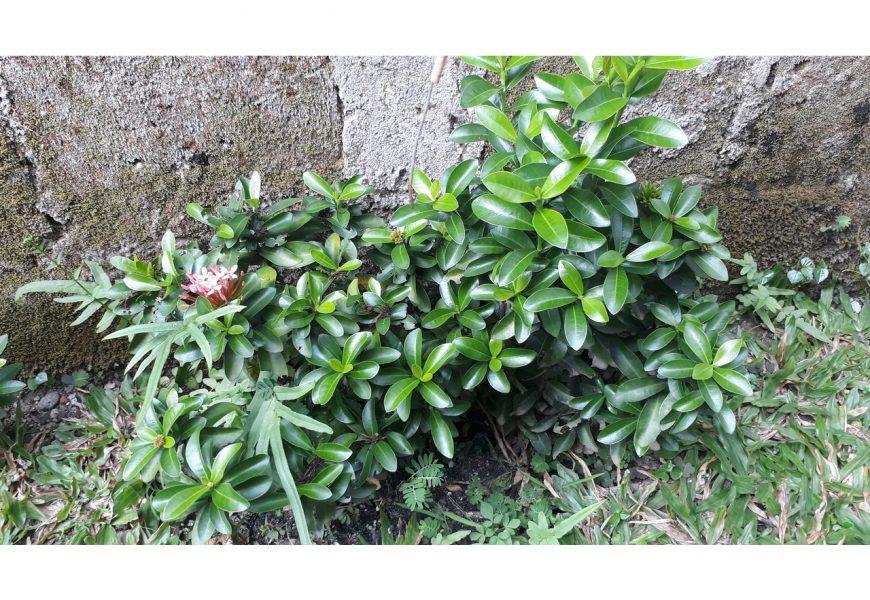 Peluang Usaha Agrobisnis Menguntungkan yang Bisa Dilakukan di Rumah